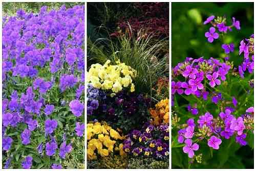 садовые сорта