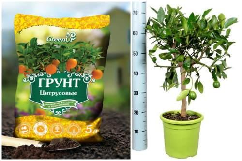 готовый грунт для цитрусовых