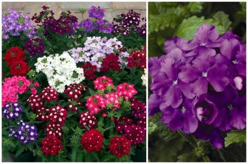 разновидности цветов
