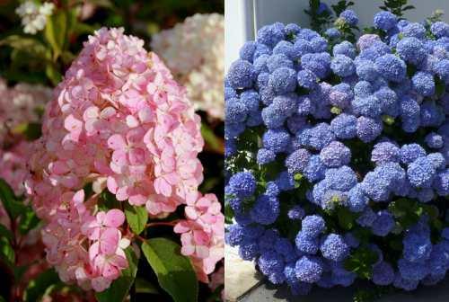 формы соцветий