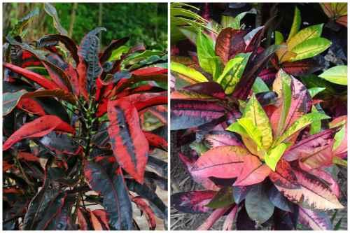 необычная раскраска листвы
