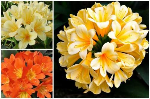 окраска цветов