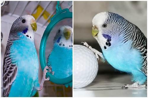 здоровая птица