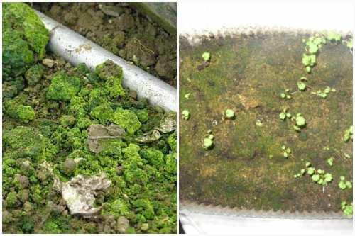 зеленый мох