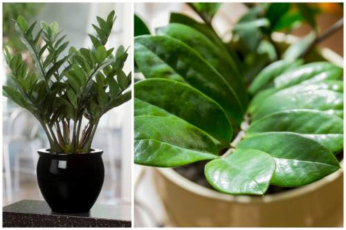 внешний вид ветвей и листвы