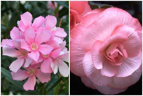 простые цветы и махровые