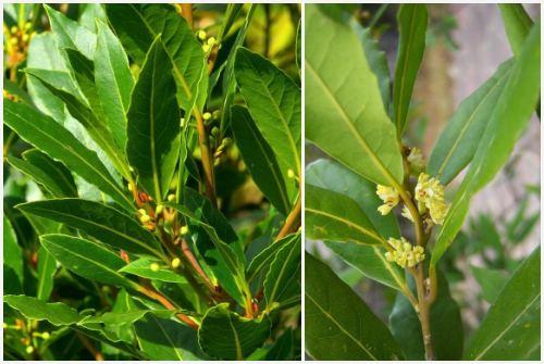 узкие листья