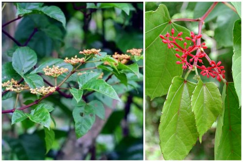 невзрачное цветение