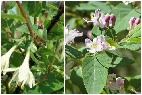 цветы разной окраски