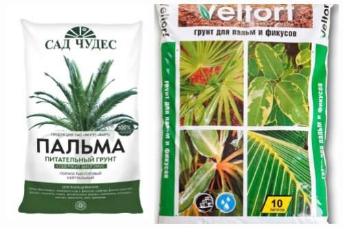 Подкормка для пальмы