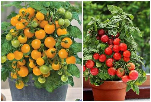 яркие ягоды