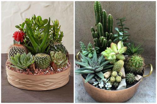 Мини-садик с кактусами