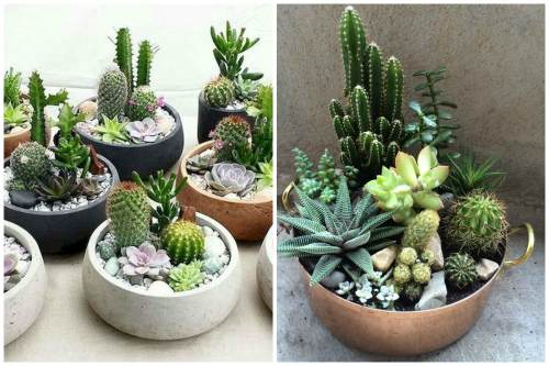 Суккулентные композиции с кактусами