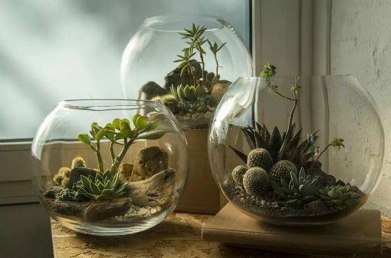 Дренаж для флорариума
