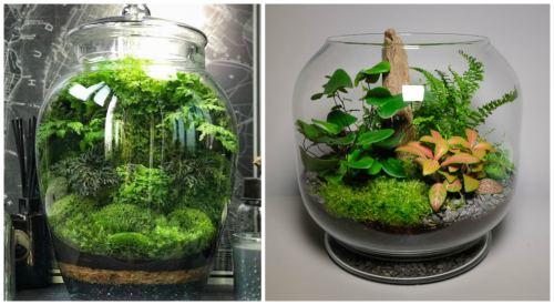 Лес в вазе