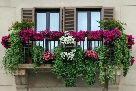 Балкон с ампельными цветами