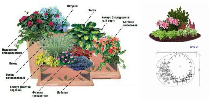 Схемы высадки цветов