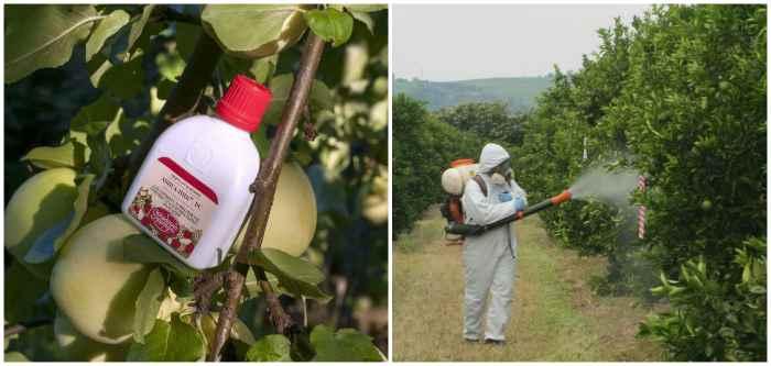 Обработка фруктовых деревьев фунгицидами