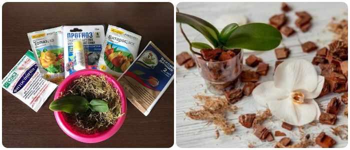 Витарос для орхидей